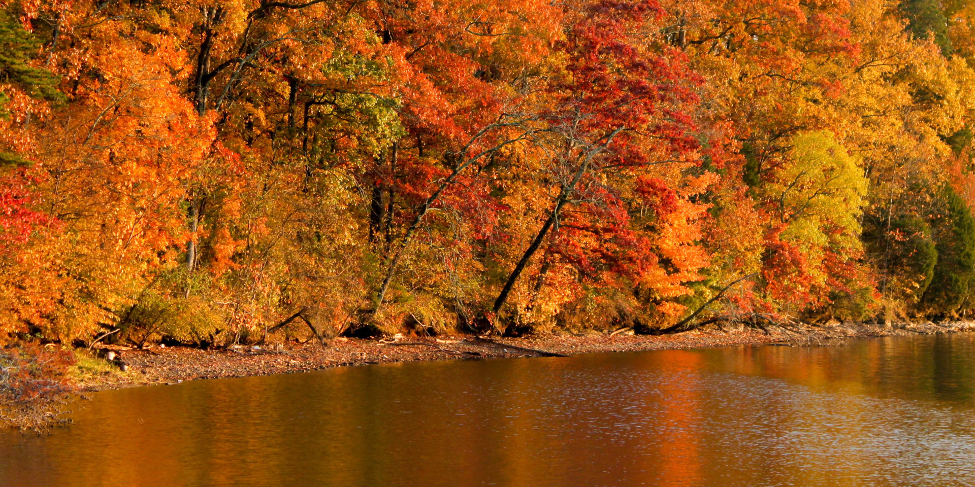 fall color by lake
